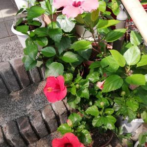 今日の花たち 他