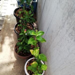12日購入植物到着(またぁ~???)