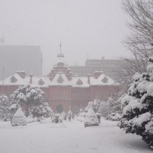 やっと札幌に雪が積もりました