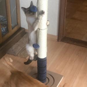新しいキャットタワー