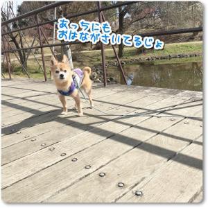 ★★昭和記念公園・困った仔★★