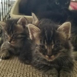 3匹目の猫計画4 ヤンママ・ソフィア
