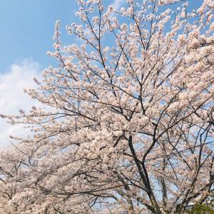 花のある生活☆