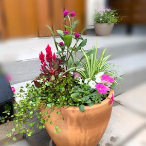♡テラコッタ鉢で華やかな寄せ植え&植え替えに挑戦!♡