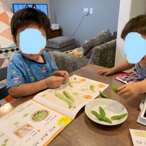 【通信で幼児教育】Z会始めました。