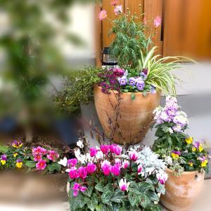 【ガーデニング】寄せ植えを冬〜春に咲く花にチェンジ!