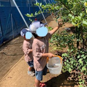【ブルーベリー狩り】2歳児でも楽しめた♡都内の農園で摘み取り体験。