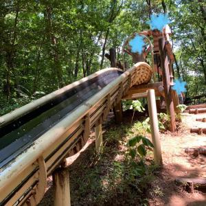 【山遊び】夏休み満喫♡虫取り、ロング滑り台やカキ氷