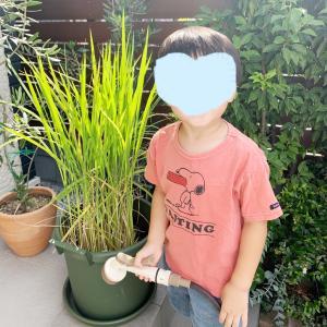 【バケツ稲作り】その後&お花のお世話