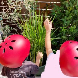 【究極の食育】バケツ稲に稲穂が付きました!