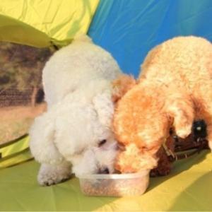 愛犬の皮膚炎・病気を克服する期間の具体的な食事とは?