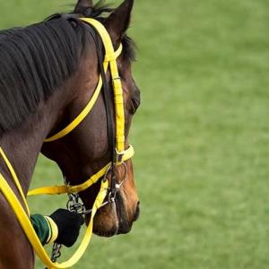 アスリートも競走馬も腸活をして身体能力を上げる時代!