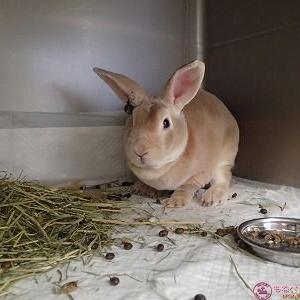 ウサギの悪性黒色腫(その2)