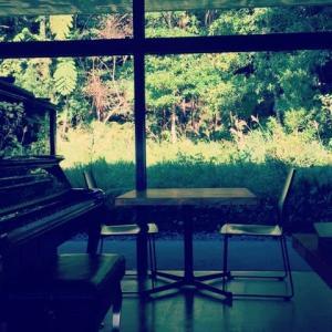 延期?「森と音遊び~バイオリン&ピアノの調べ~」開催決定です!!