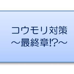 シャッターに住み着くコウモリ対策~最終章!?~