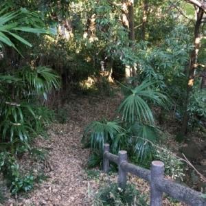 昔の面影のある崖線上の鎌倉街道と三芳町唯一の湧水のある竹間沢こぶしの里