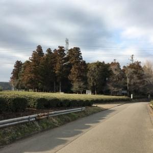 茶畑の中のこんもり林にある三輪神社とそこにあった渋沢栄一書の記念碑