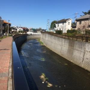 練馬区で着実に進む石神井川の河川改修工事と桜の開花