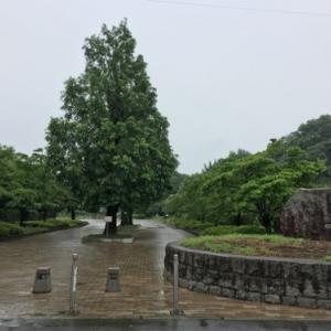 ちょっと来るのが早かったか富士見市せせらぎ菖蒲園と紫陽花の名前と漢字の不思議