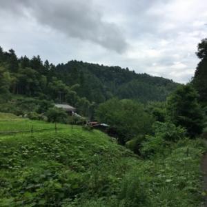 ロンヤス会談が行われていたのをニュースで見たことのある自然いっぱいの日の出山荘