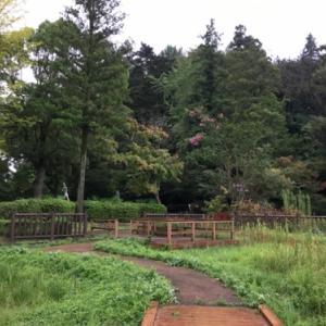 八王子の三方を川で囲まれた台地上の片倉城跡の空堀と住吉神社