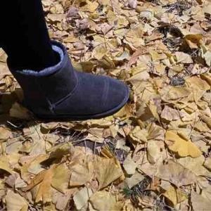 落ち葉の道を歩く