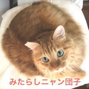 川猫見習い何してた?