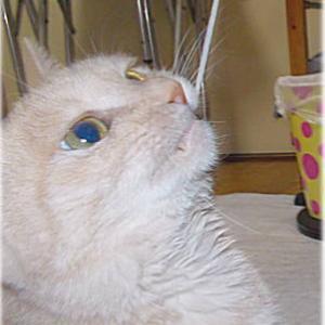 12.03 川猫見習い何してた?