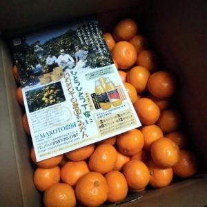 1161) 今年も 南紀熊野 MAKOTO 農園のみかん
