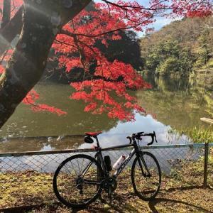 毎年恒例、泉自然公園の紅葉(11/17のサイクリング)