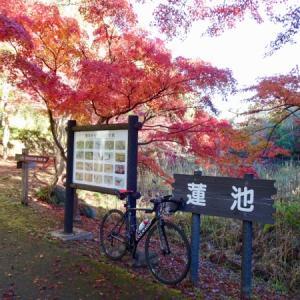 今年も泉自然公園へ紅葉を見に行ってきた