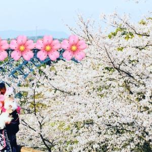 心は桜色♡