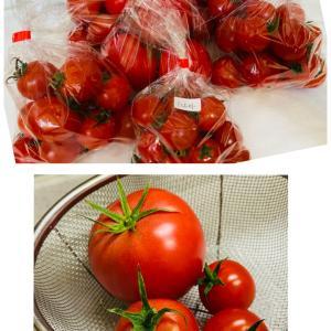 トマトに助けていただく