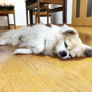 床暖入れました