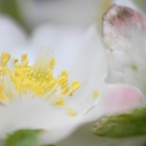 お花たちとリングフィットアドベンチャー
