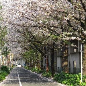 桜散る散歩道