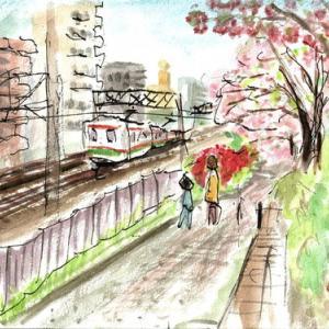 中央線沿いの八重桜