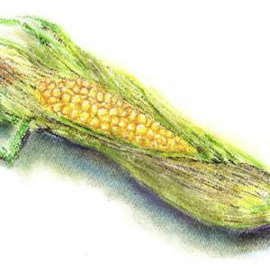 トウモロコシをパステルで描く