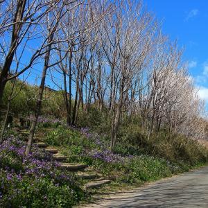 紫の花に囲まれて~上越線