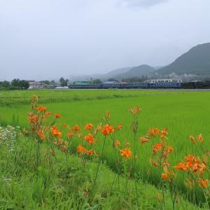 梅雨空とD51~上越線