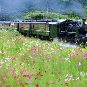 コスモス咲く花園~磐越西線