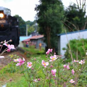 可憐な花と~真岡鐡道