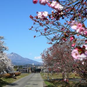 桜並木の踏切にて~磐越西線