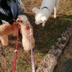 チロルちゃんと有馬富士公園お散歩
