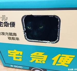 """金沢にある""""猫カフェ"""""""