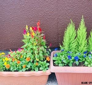 季節の花の苗