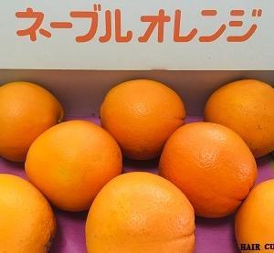 献上ネーブルオレンジ
