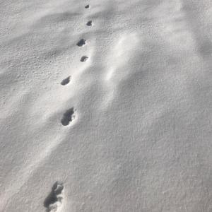 追憶の日帰りハイキング 〜氷ノ山〜