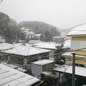 雪が降っている日の過ごし方