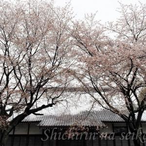 季節外れの東京の雪